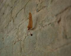 Immer an der Wand lang