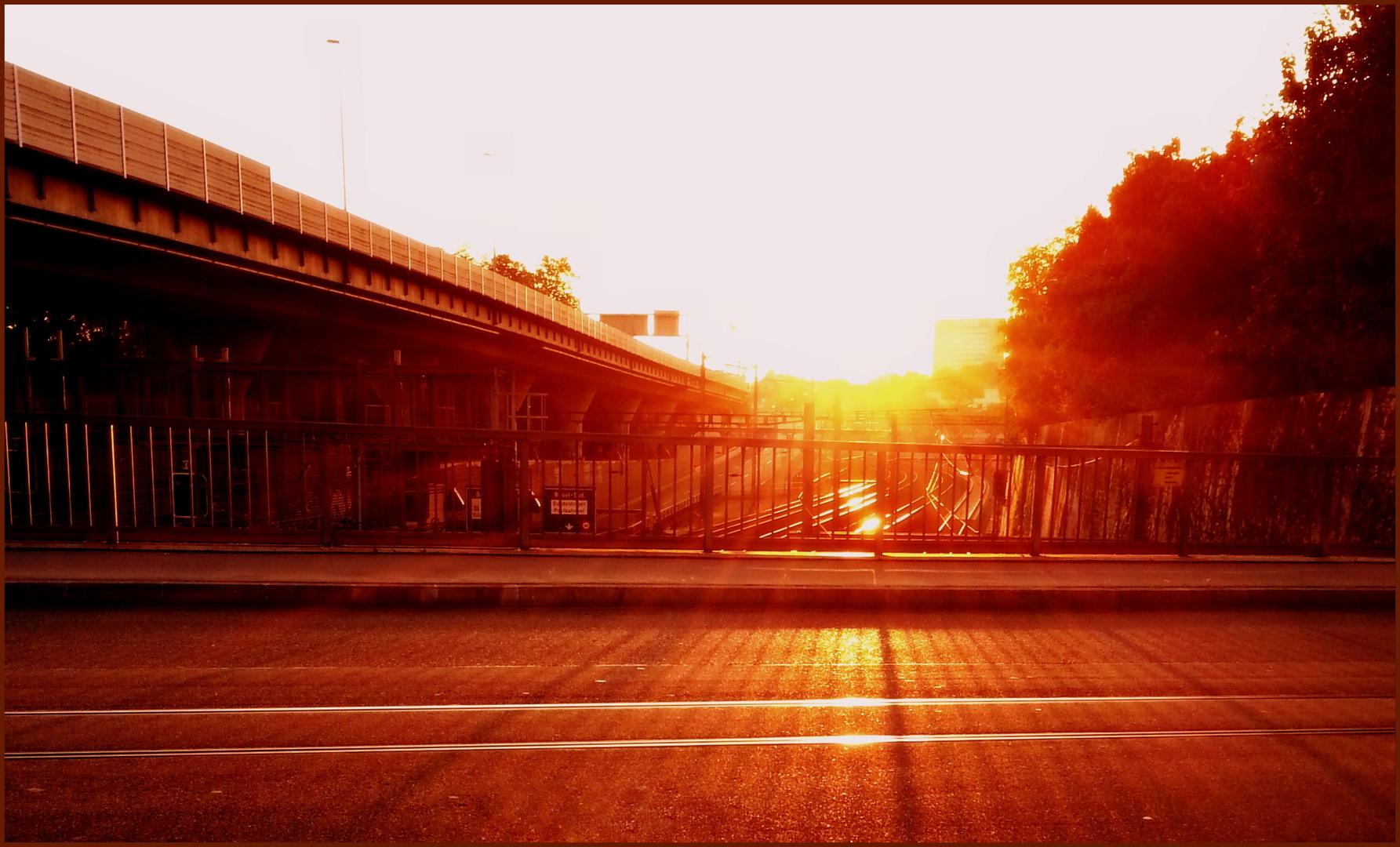 Immer der Sonne entgegen