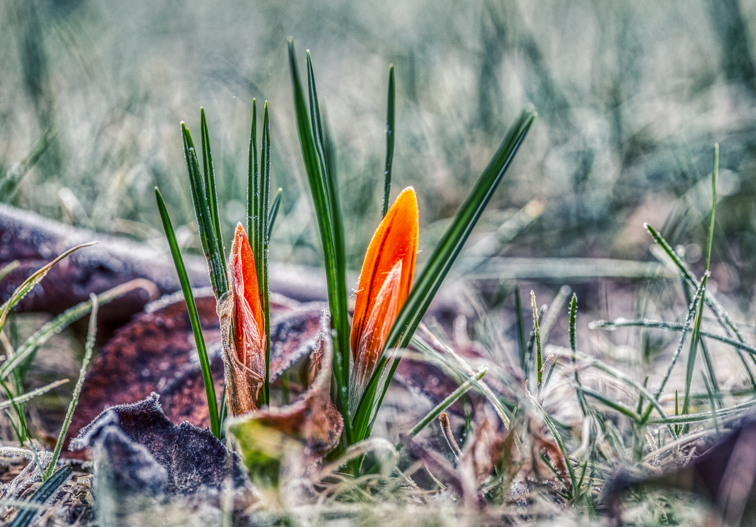 Immer die ersten Frühlingsboten....