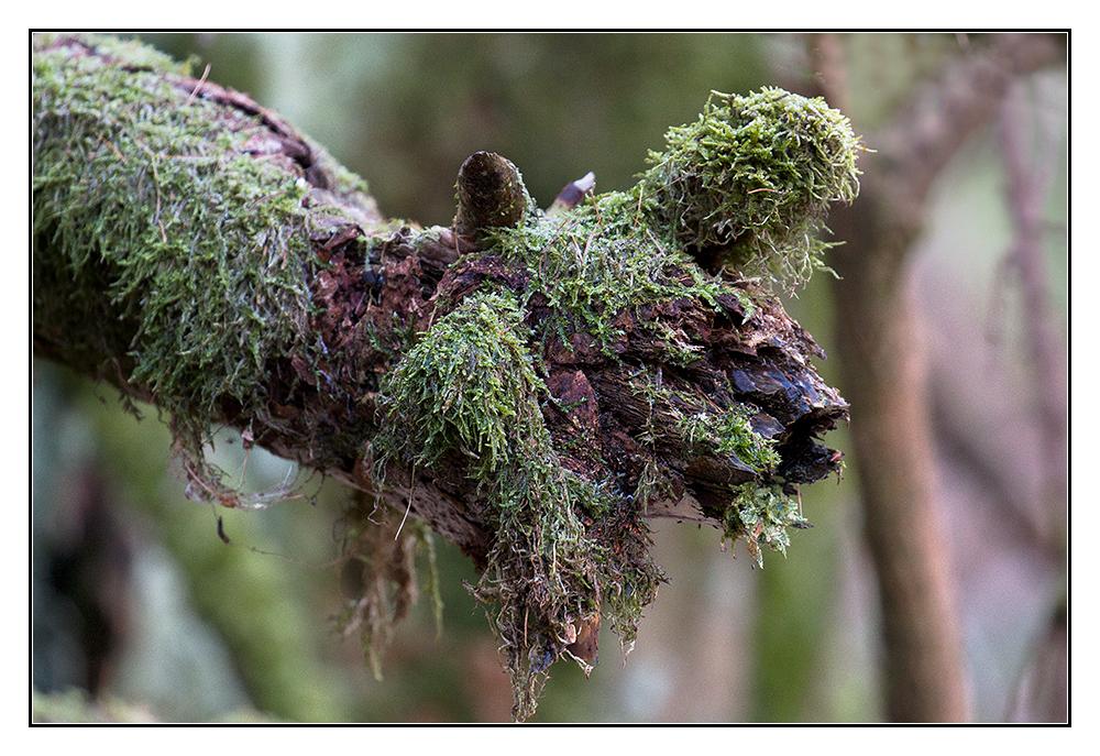 Immer im Wald aber immer gut drauf (1)