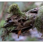 Immer im Wald aber immer gut drauf (2)