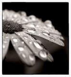 ...immer nur regen..tropfen..und nässe..verfluchter sommer 2005...