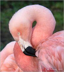 """""""Immer nur rosa."""""""