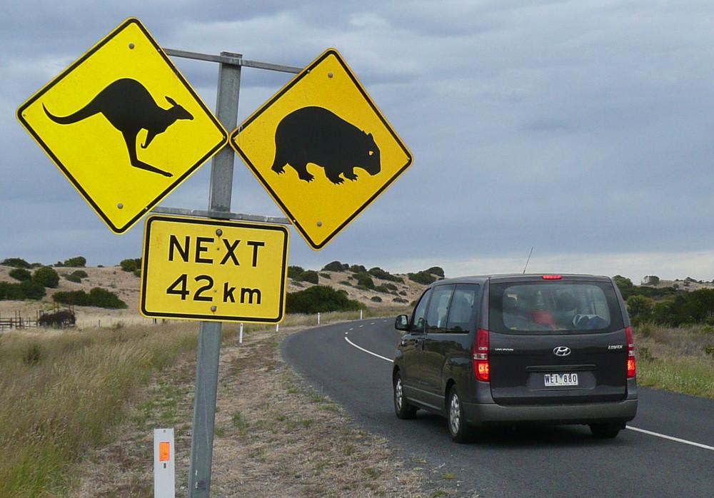 Immer präsent: Kängurus, Wombats und Emus auf den Straßen Australiens
