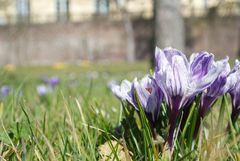 Immer wieder Frühlingserwachen