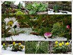 Immer wieder kommt ein neuer Frühling...