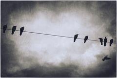 immer wieder Tauben...
