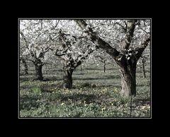 ... immernoch im letzten Frühling ...