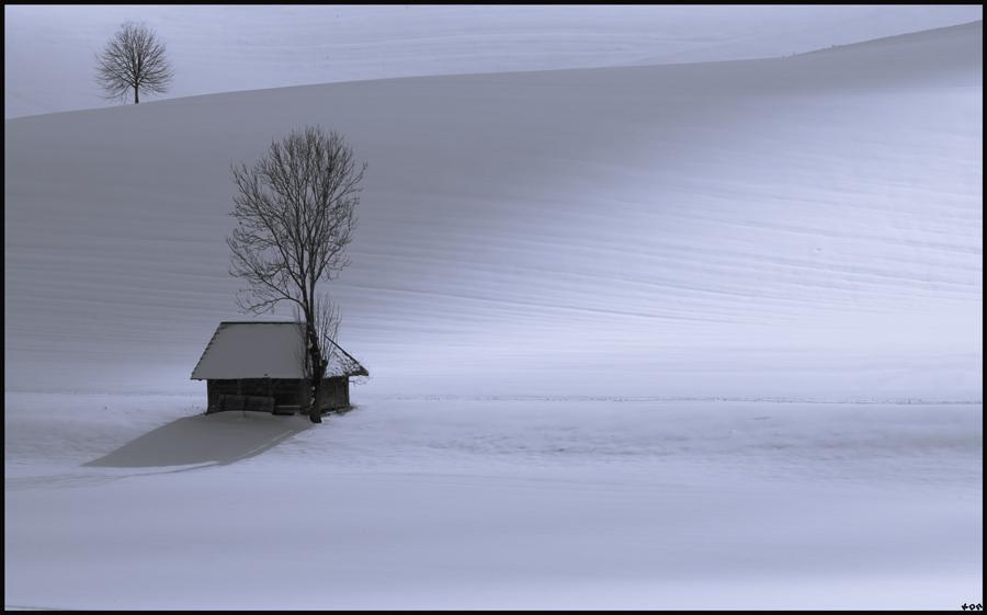 Immernoch Winter
