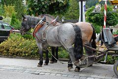 Immissionschutz bei Pferden