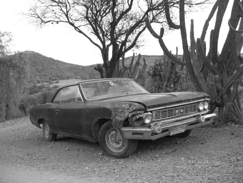 Impala in Wüste