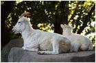 Impression aus dem Leipziger Zoo