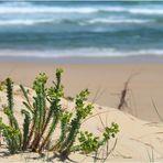Impression en haut de la dune