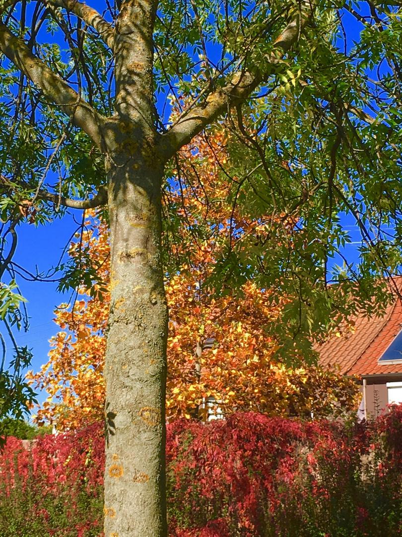 Impression Herbst