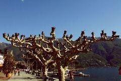 Impressionen aus Ascona 4