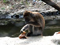 Impressionen aus dem Basler Zoo-5