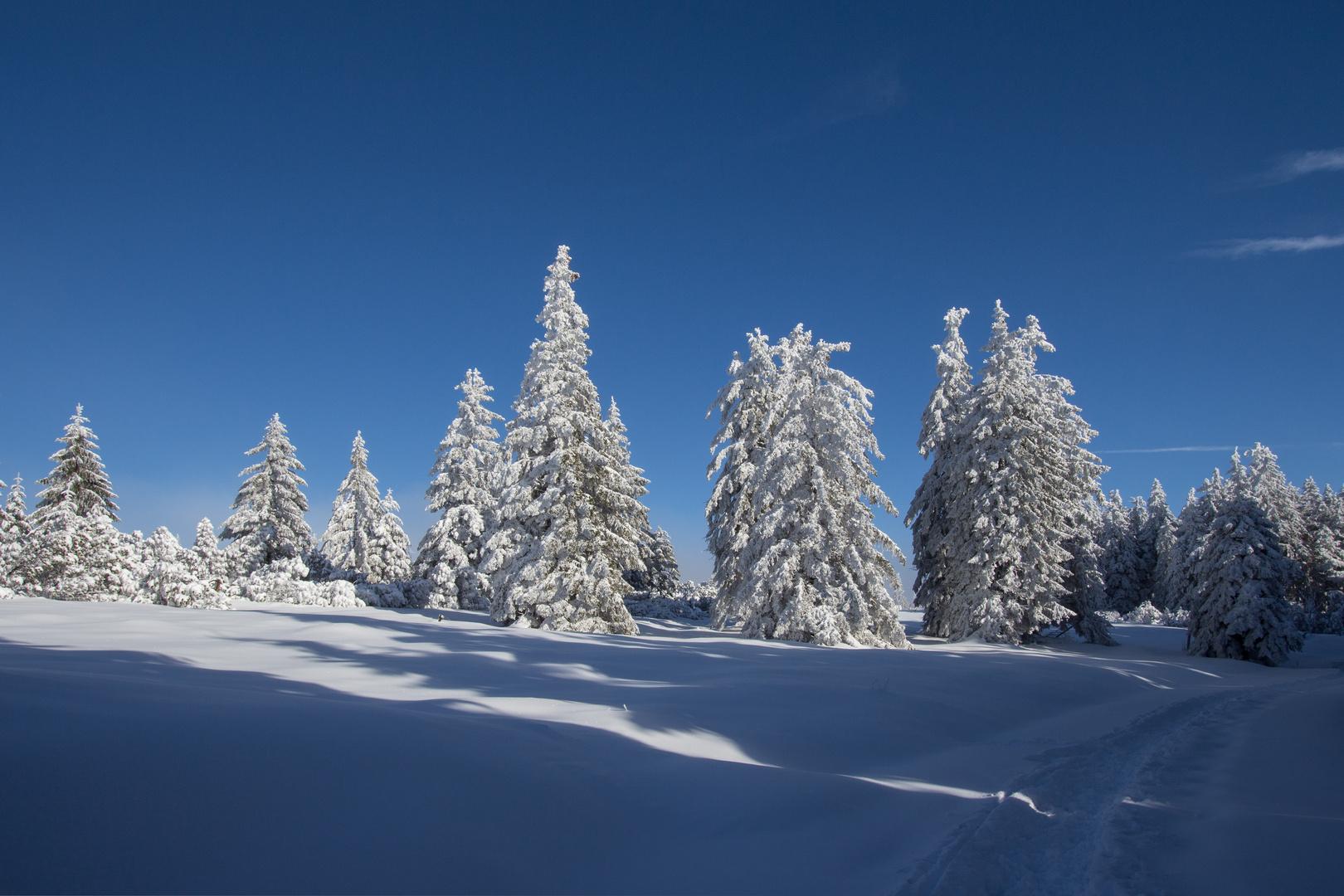 Impressionen aus dem Schwarzwald ...