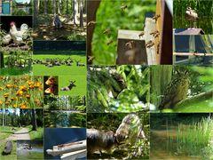 Impressionen aus dem Wildpark Vosswinkel