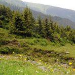 Impressionen aus den Bergen(8)
