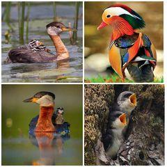 Impressionen aus der Vogelwelt