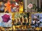 """Impressionen eines """"Goldenen Novembers"""""""