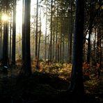 Impressionen eines Waldspaziergangs (1)