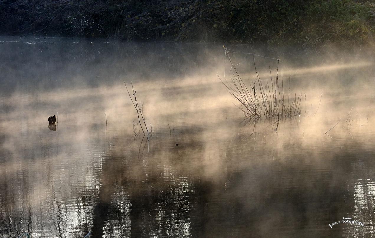 Impressionen im Nebel