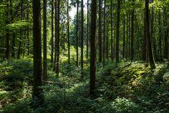 Impressionen im Sommerwald