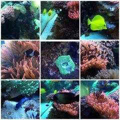 Impressionen Meerwasseraquarium