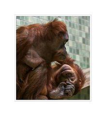 Impressionen vom Berliner Zoo...