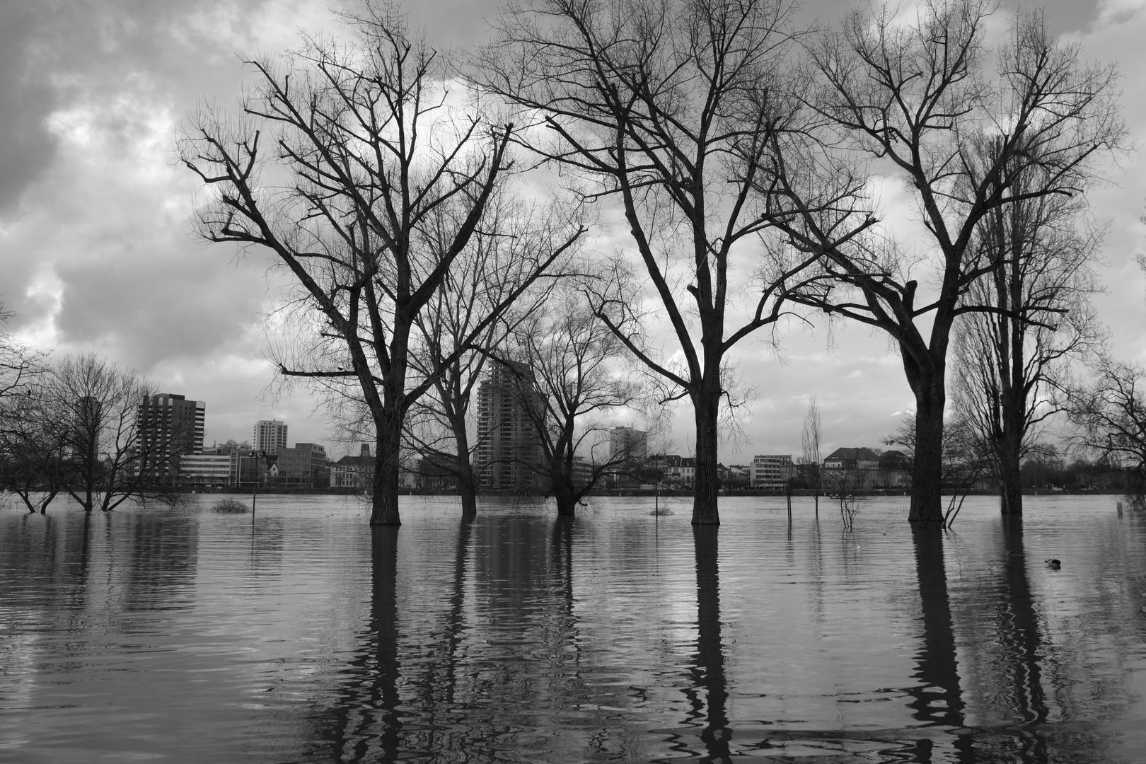 Impressionen zum Hochwasser in Köln Februar 2021....