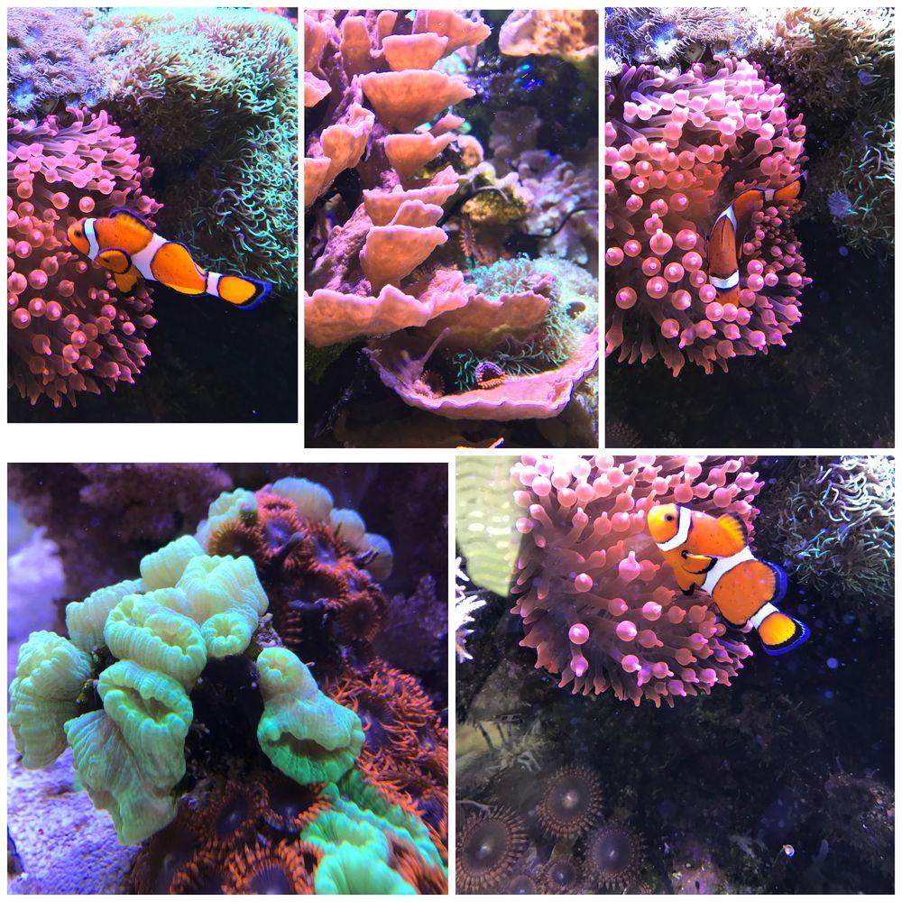 Impressionen zum Meerwasseraquarium