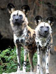 Impressionenaus dem Basler Zoo