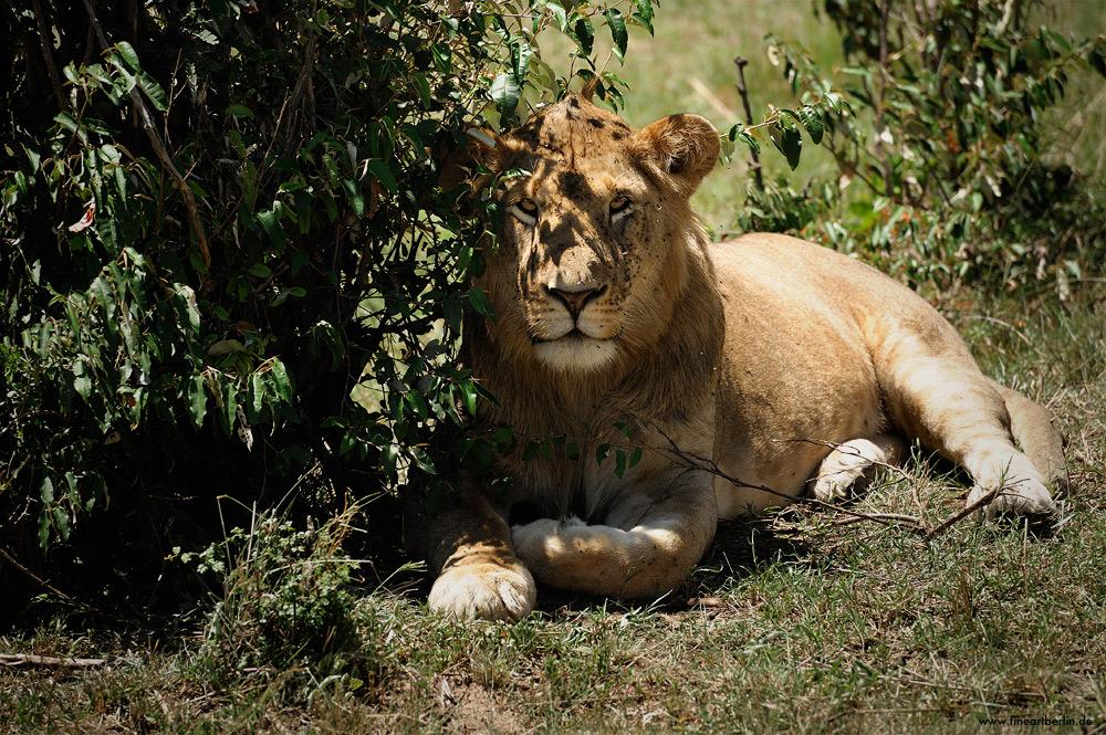 Impressionen....Masai Mara