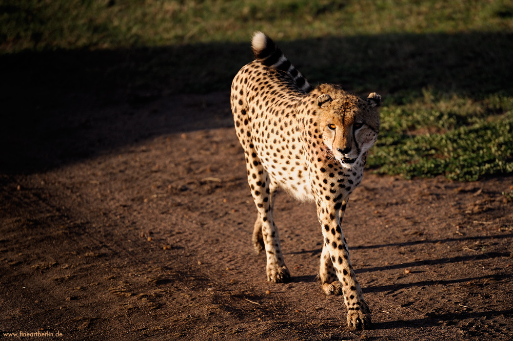 Impressionen....Masai Mara No 3