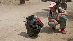 in ägypten trifft man schöne tolle tiere