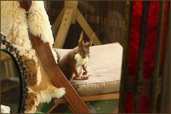 *In Aktion* Nistmaterial fürs Eichhörnchen (2)
