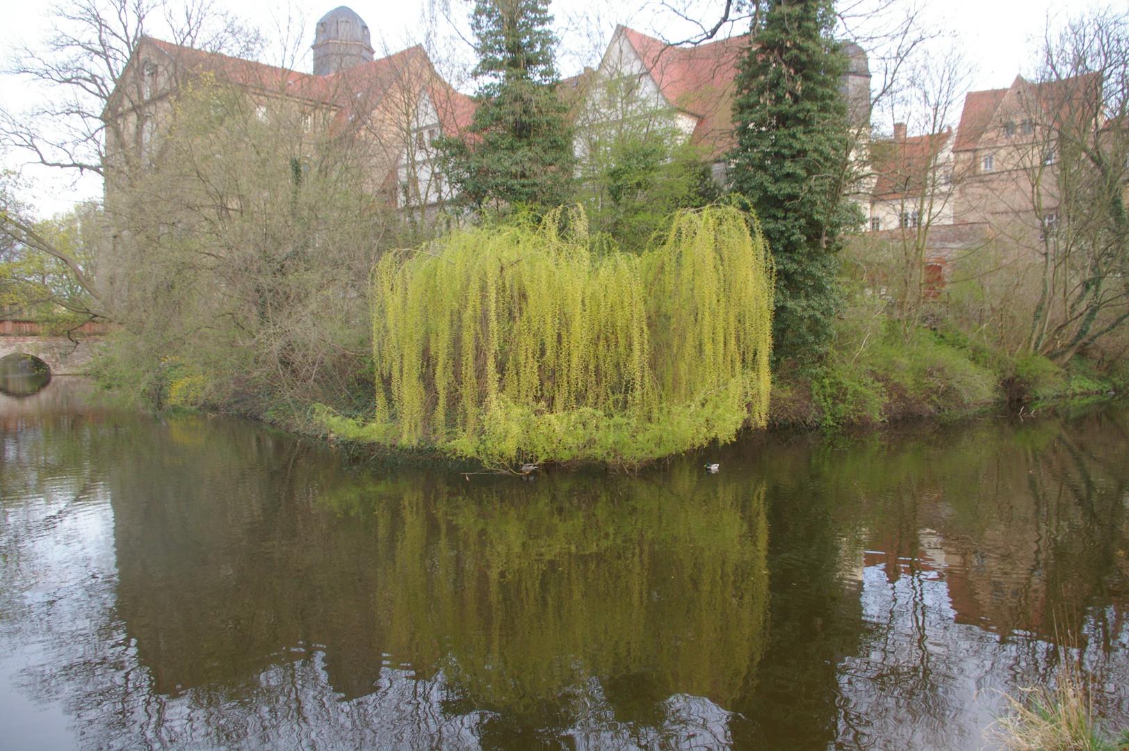 .. in Anhalt