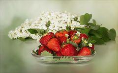 In Baden hat die Erdbeerernte begonnen...