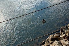 in Bahnen schwimmen