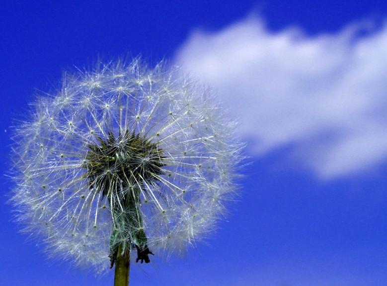 In balia del vento... come una nuvola