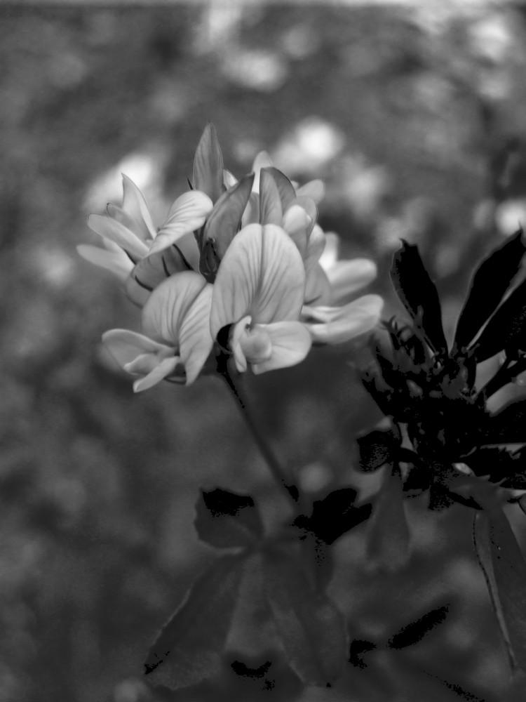 In bianco e nero