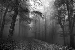 ... in bianco e nero **/