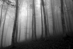 ... in bianco e nero  */