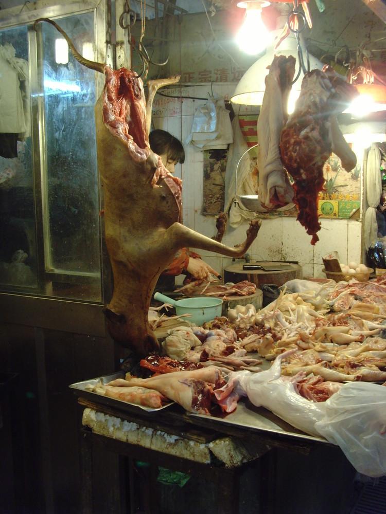 in china essen sie hunde kinox