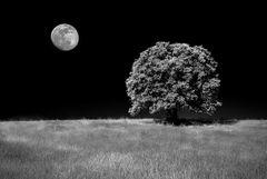 In compagnia della luna