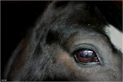 In den Augen eines Pferdes