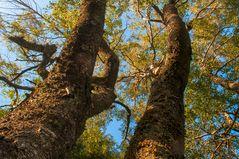 ... in den Bäumen ...