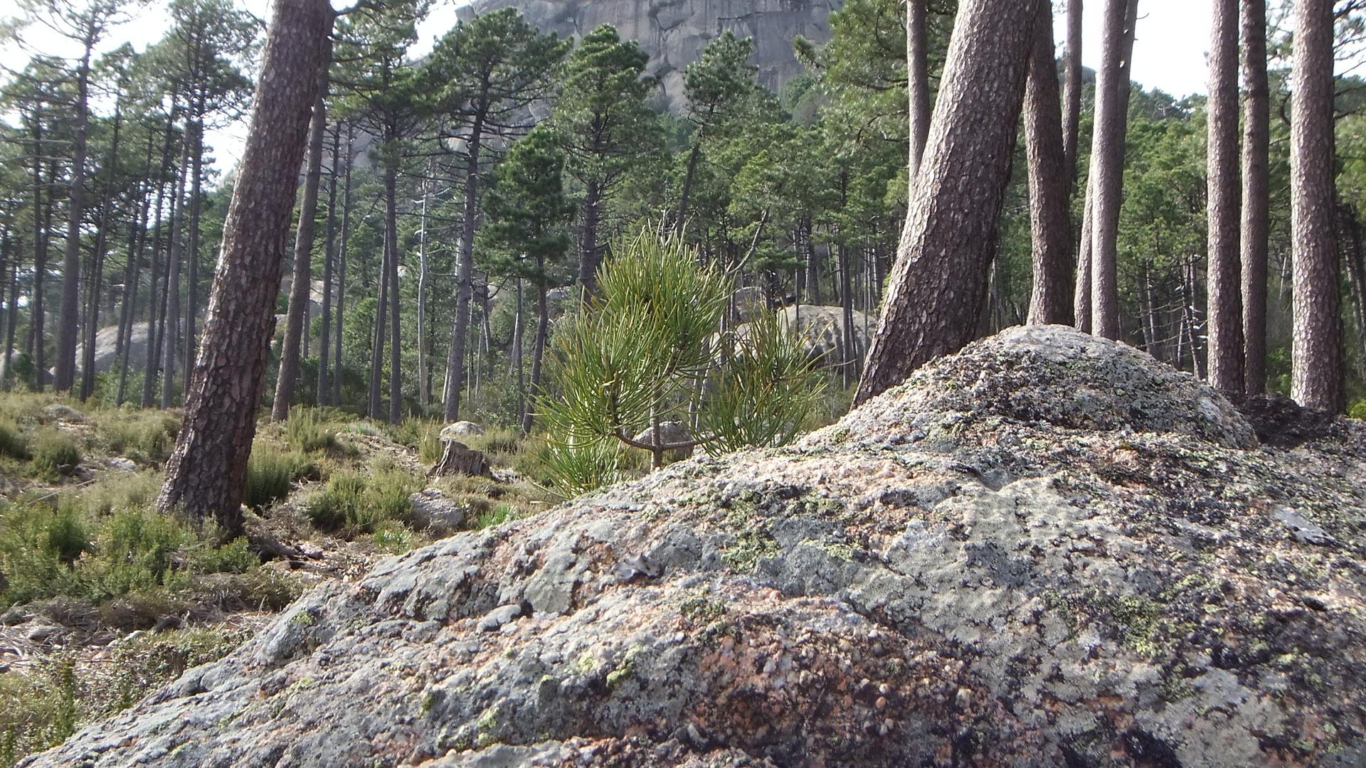 In den Bergen bei Zonza (auch in 3D)