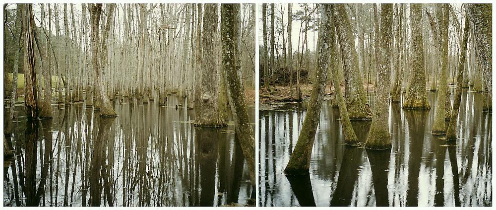 In den Cypress - Swamps von Honey-Island / Louisiana